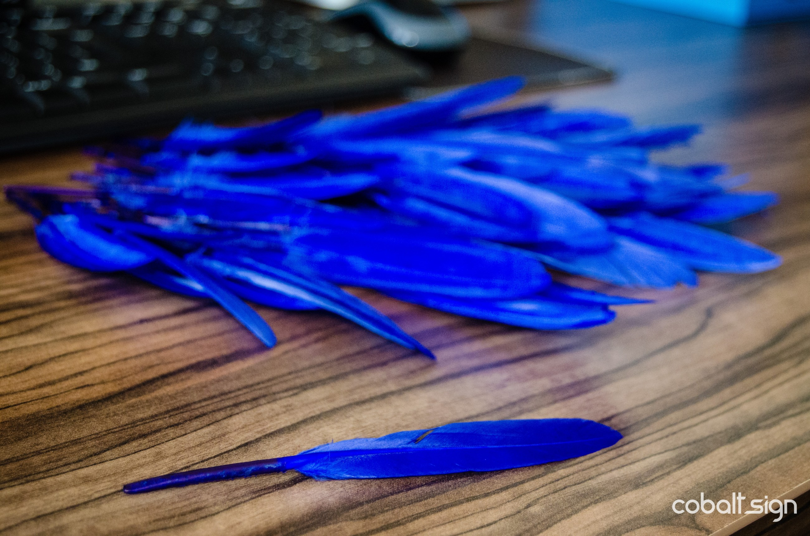 Cobalt Feathers