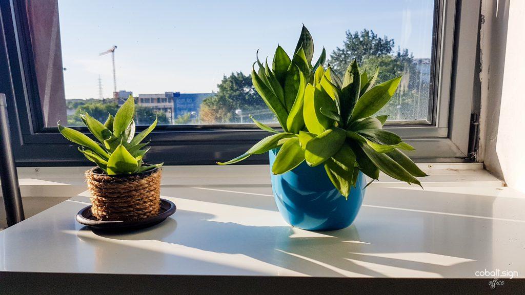 cobalt sign office plants