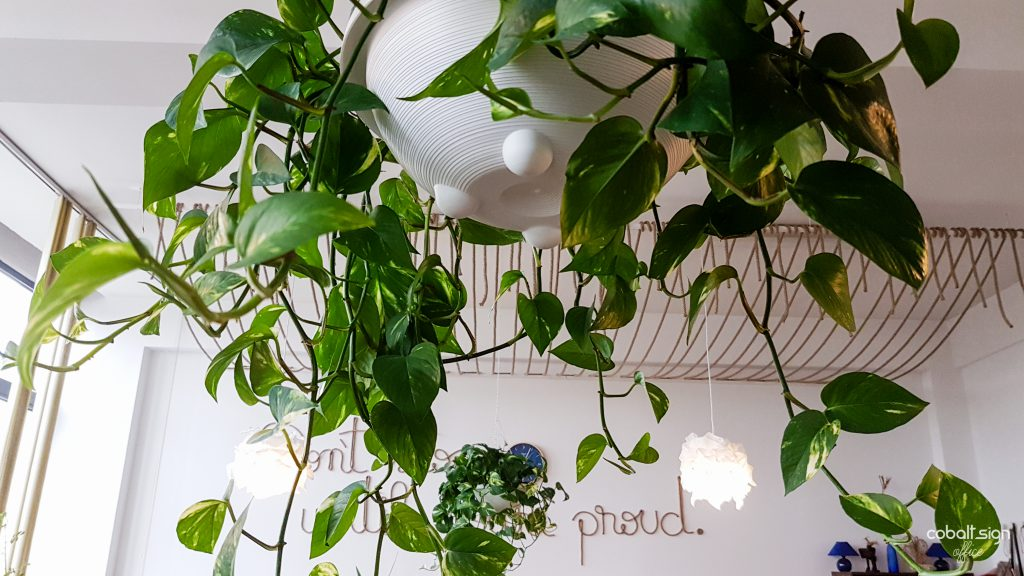 cobalt sign office plants and quote