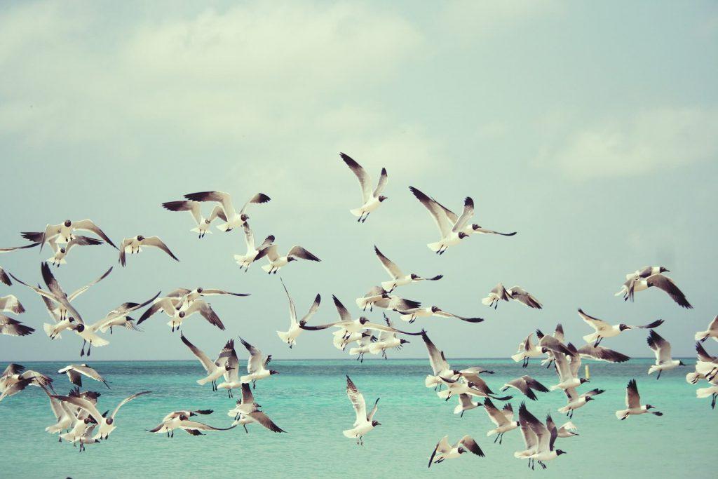 seagulls-background